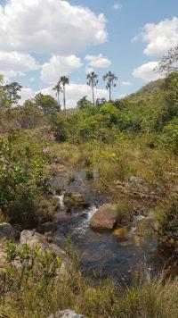 Buritis de 200 anos próximos da cachoeira Almécegas 2 em dia ensolarado de setembro