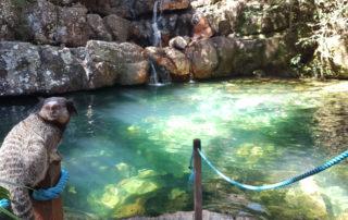 Poço do xamã com mico estrela parado no corrimão posando para foto na cachoeira das loquinhas na Chapada dos Veadeiros
