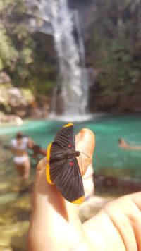 Borboleta na mão de turista com a cachoeira Santa Bárbara ao fundo