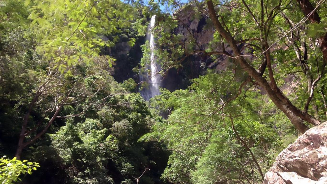 Vista da cachoeira do label pela trilha no fundo das árvores