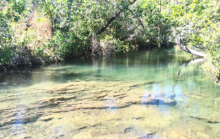 Piscina natural no complexo de cachoeiras do rio da prata em cavalcante na Chapada dos Veadeiros