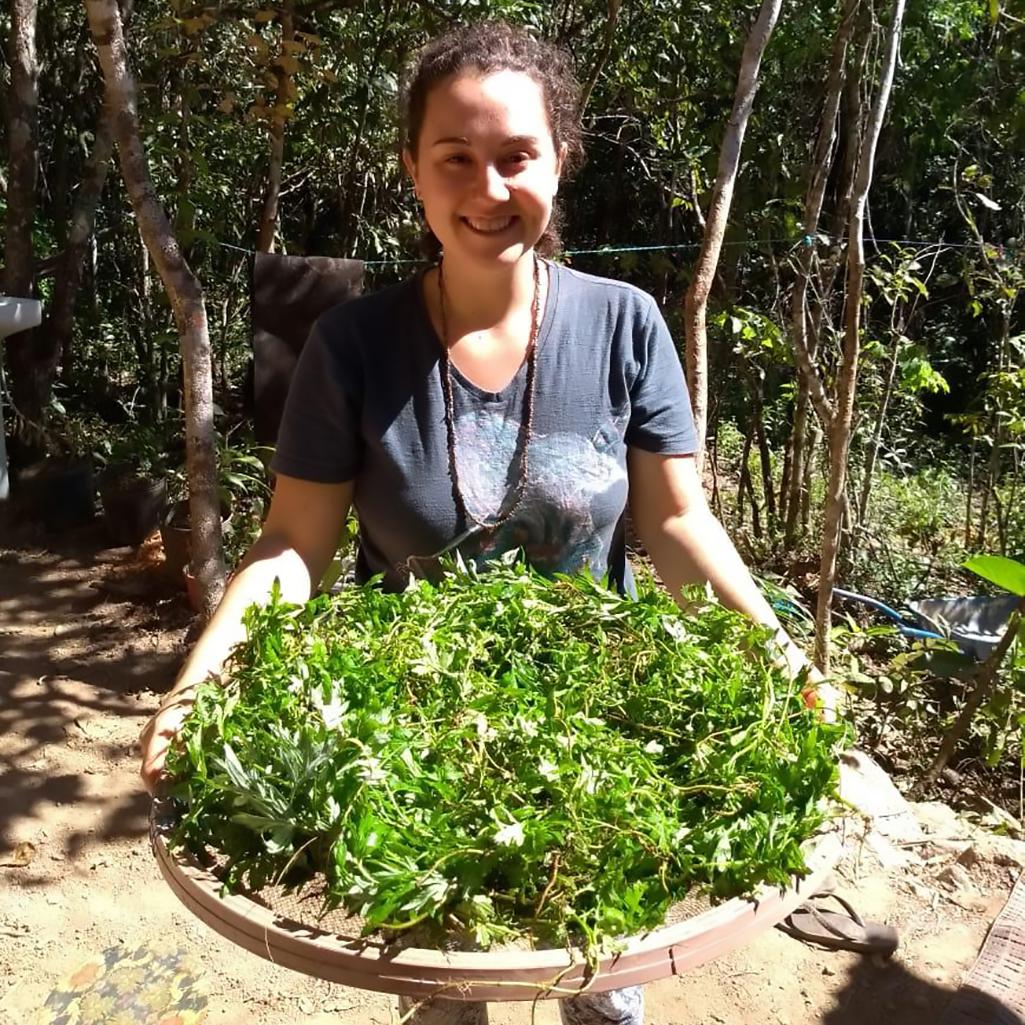 A enfermeira Gabriela preparando mais um chá de enema do cerrado com todas as ervas nativas necessárias